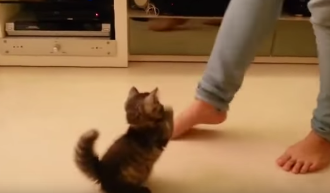 可愛すぎる猫パンチ!