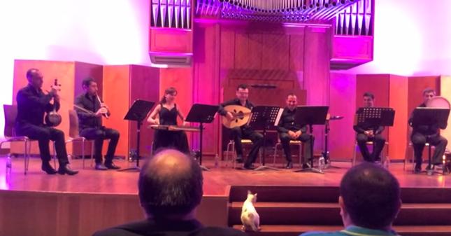 コンサートを見物していく猫さん。