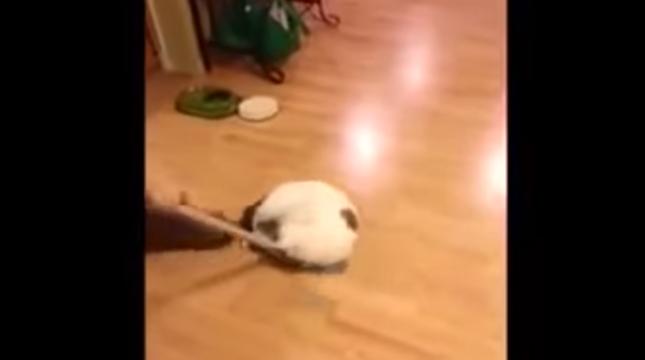 カーリング猫