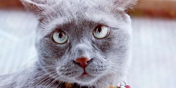 困り顔猫。