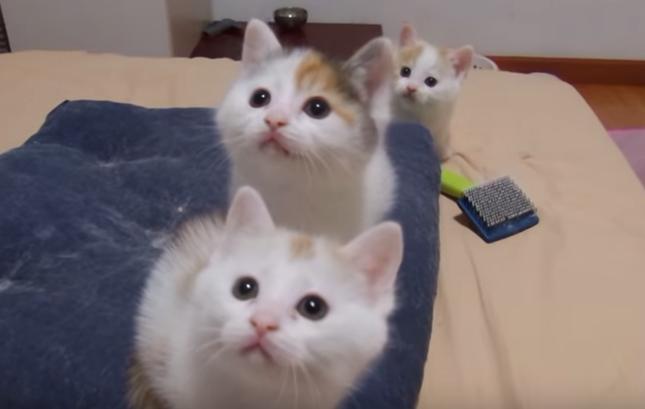 注目する子猫たち。