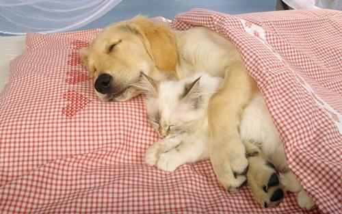 暖かい腕枕が心地いい。