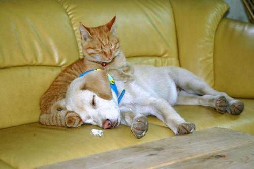 安心感からの熟睡。