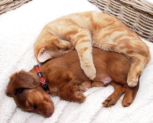 抱きしめたくなる愛おしさ。