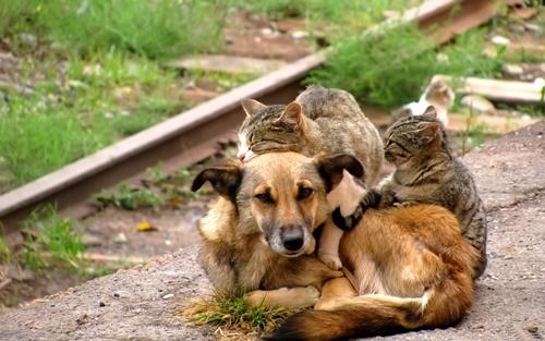 犬の包容力は無限大。