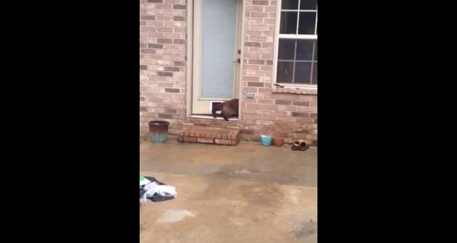 猫用ドア・・・