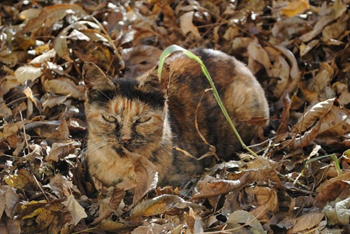 猫は生粋の忍者!