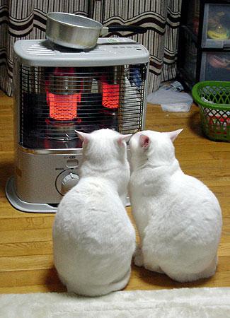 まったりポカポカする2匹の猫。
