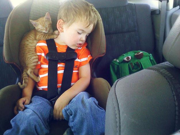 仲良く眠る少年と子猫。