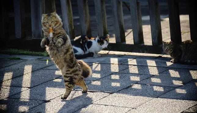 ちくわを咥える猫の画像。