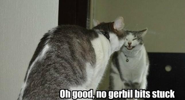 鏡で笑顔の練習をする猫!?