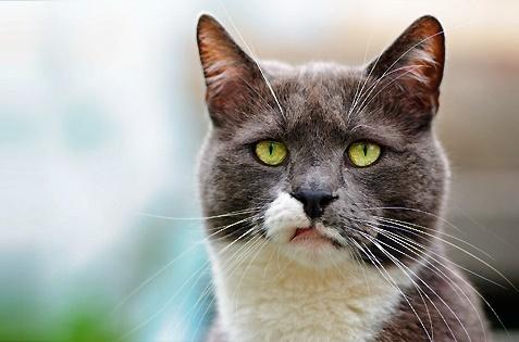 舌打ち顔なネコ。