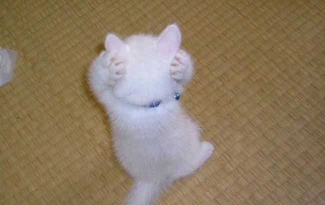 にゃんてこったポーズの子猫。