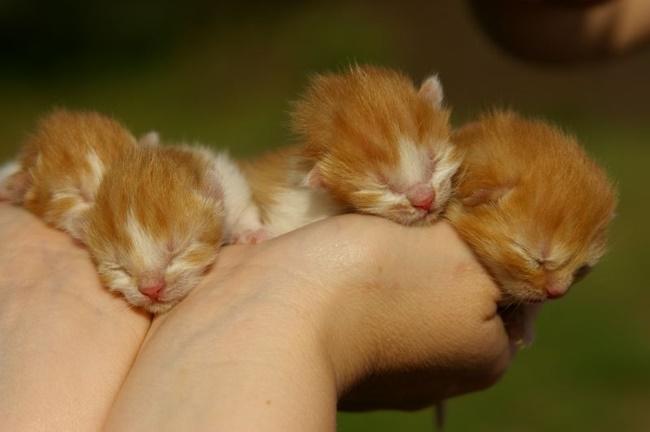 手のひらいっぱいの子猫たち。