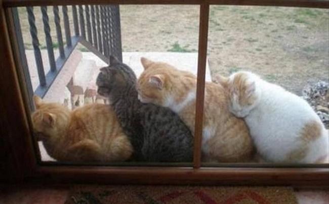 猫々トレイン。