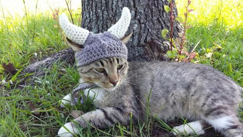 猫ヴァイキング!
