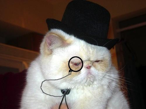 ドクター猫。
