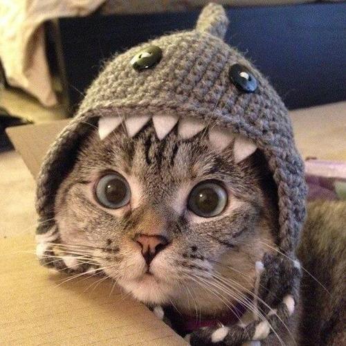 食べられ帽子。