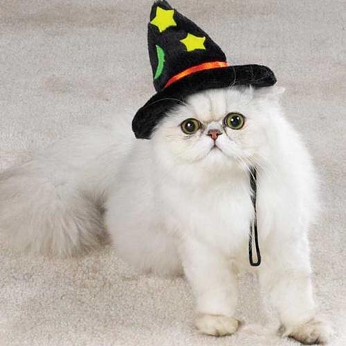 魔法使い猫。