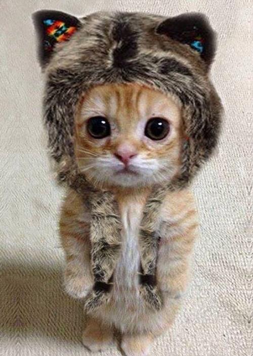 脱帽の可愛さ。