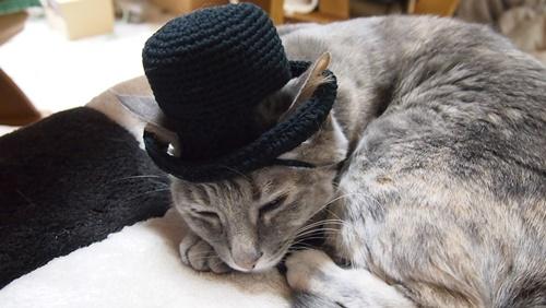 耳出し帽子は素敵。