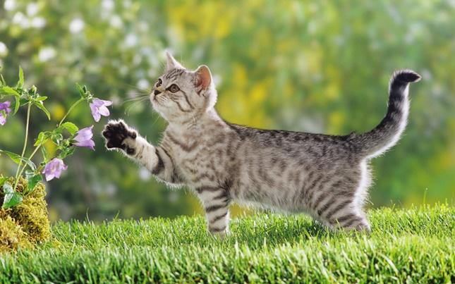 花の香りに誘われる猫。