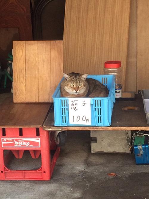 猫さん買われちゃうぞっ!!
