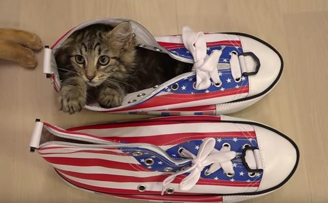 靴にスッポリ入る子猫。