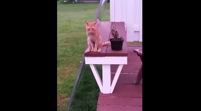 すでに猫にしては特殊な座り方。