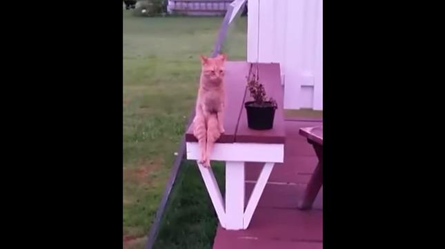 人間のような座り方に!