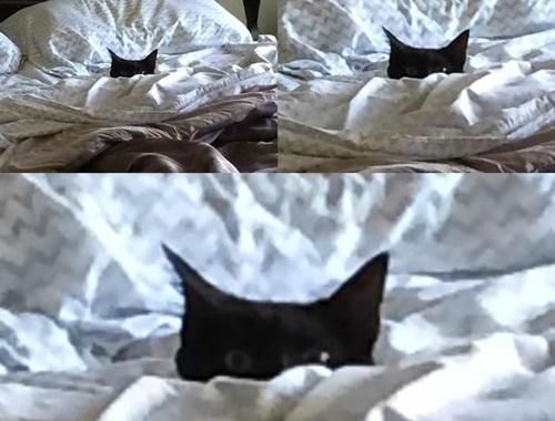 まくら・・・猫だ!