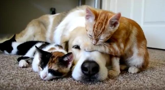 仲良しな犬と子猫たち。