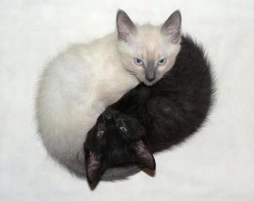 白黒猫の陰と陽。