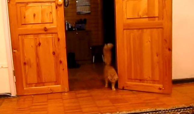 音につられやってきた猫さん。