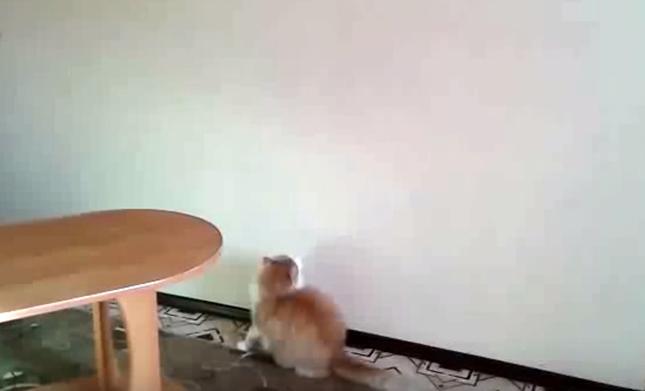 丸々具合が最高にカワイイ猫。