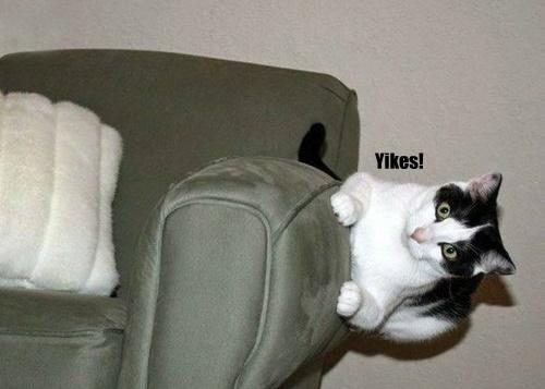 とうとう猫が重力を無視しはじめた。