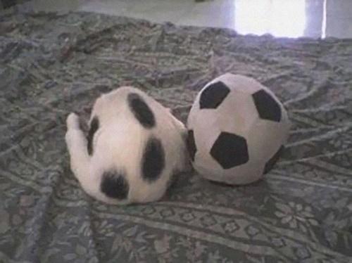 ボールは1個だったはず・・・
