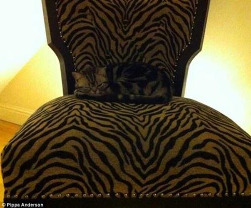 虎柄同化。