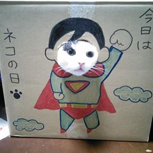 スーパーニャンコ!