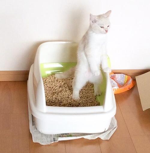 なぜか立って踏ん張る猫さん。