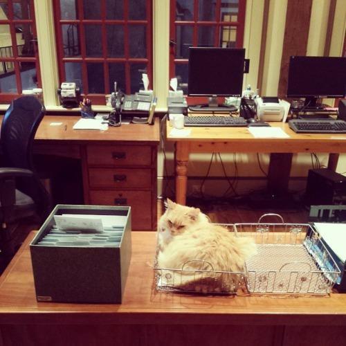 猫も働く事務所。