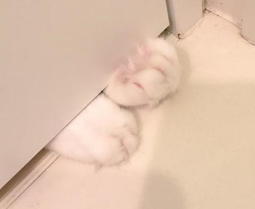 隙間からの猫の手は超絶カワイイ!