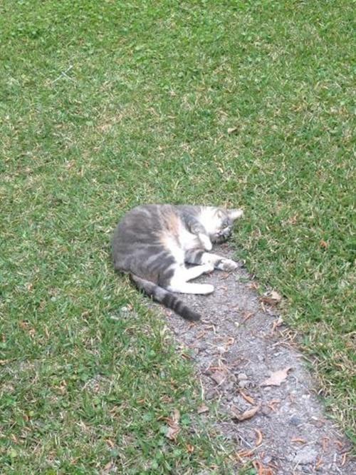 猫隕石の衝突!?