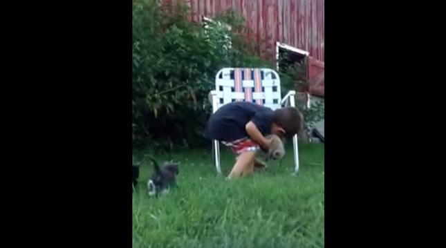 散らばった子猫たちを集める少年。