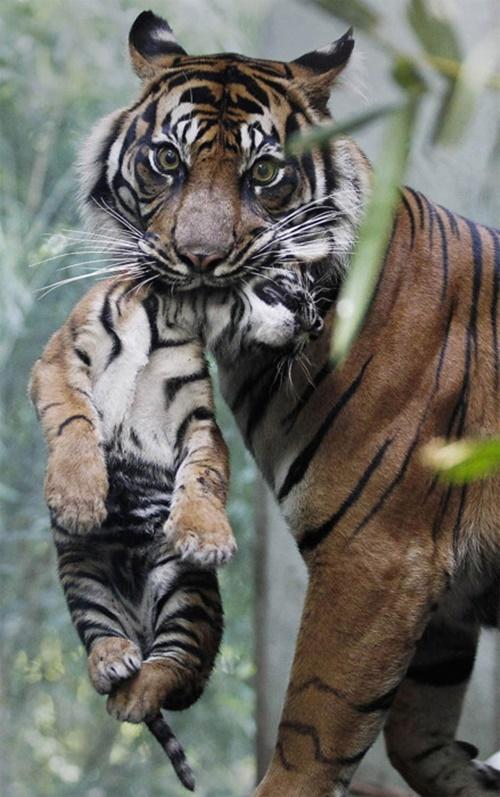 虎さん親子も。