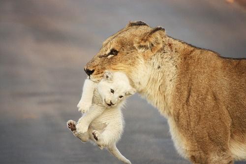 百獣の王だって母と子です。