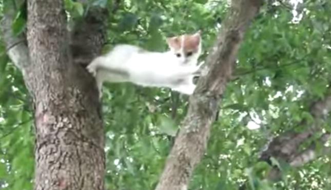 降りれなくなった子猫。