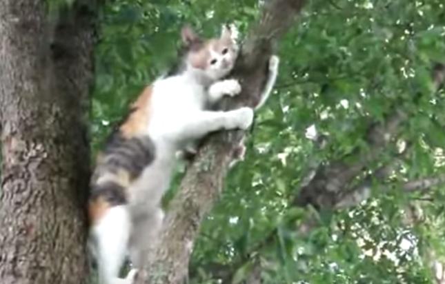 母猫が救助に向かうが・・・