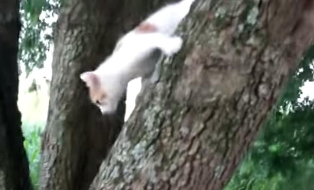 恐怖を克服した子猫。