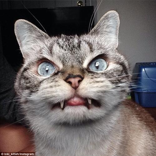 ドラキュラ猫ロキ!